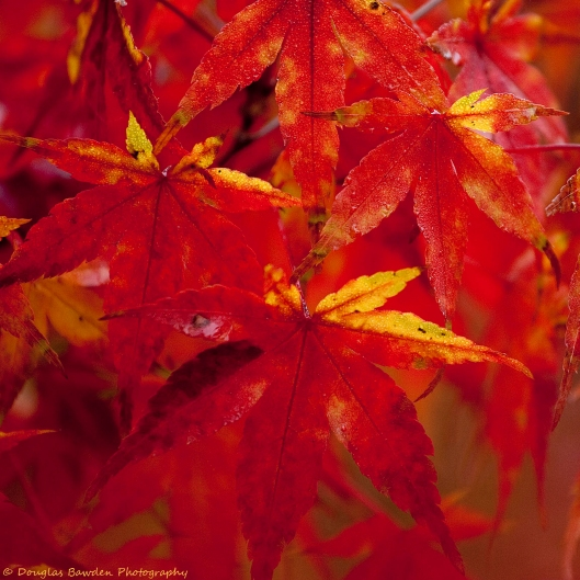Colors of Fall No.1