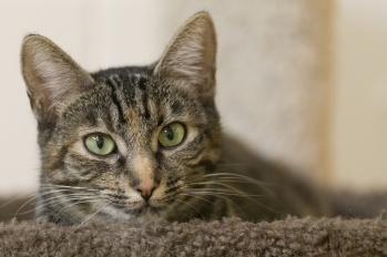 Petaluma Animal Services Foundation